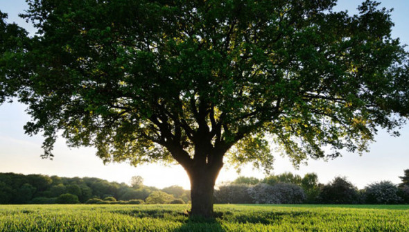 Посадка-деревьев-на-территории-ЭкоТехноПарка
