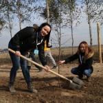 акция skyway посади дерево скайвей 12