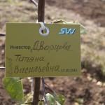 акция skyway посади дерево скайвей 15
