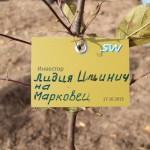 акция skyway посади дерево скайвей 25