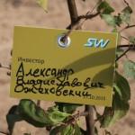 акция skyway посади дерево скайвей 38