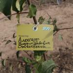 акция skyway посади дерево скайвей 4