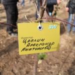 акция skyway посади дерево скайвей 65