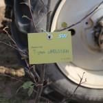 акция skyway посади дерево скайвей 71