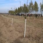акция skyway посади дерево скайвей 75