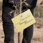 акция skyway посади дерево скайвей 76