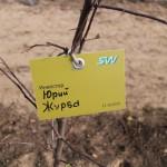 акция skyway посади дерево скайвей 84