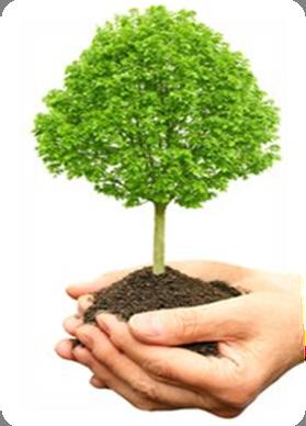 акция скайвей посади дерево