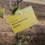 акция skyway посади дерево скайвей 13