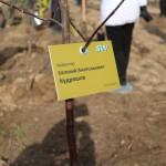 акция skyway посади дерево скайвей 14