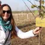 акция skyway посади дерево скайвей 23