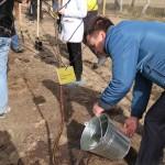 акция skyway посади дерево скайвей 29