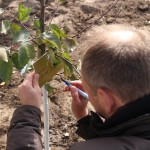 акция skyway посади дерево скайвей 3