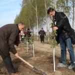 акция skyway посади дерево скайвей 33