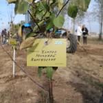 акция skyway посади дерево скайвей 36
