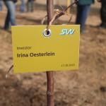 акция skyway посади дерево скайвей 37