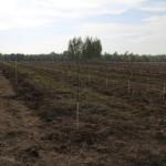 акция skyway посади дерево скайвей 44