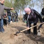 акция skyway посади дерево скайвей 50