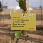 акция skyway посади дерево скайвей 51