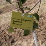 акция skyway посади дерево скайвей 57
