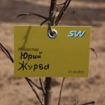 акция skyway посади дерево скайвей 60