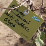 акция skyway посади дерево скайвей 64
