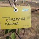 акция skyway посади дерево скайвей 67