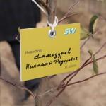 акция skyway посади дерево скайвей 85