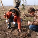 акция skyway посади дерево скайвей 86