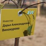 акция skyway посади дерево скайвей 91